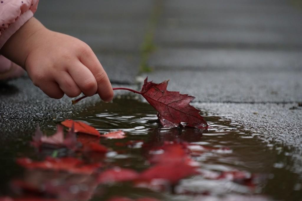 autumn-2917472_1920