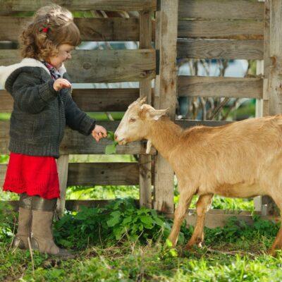 Animali della fattoria: giochiamo a riconoscerli